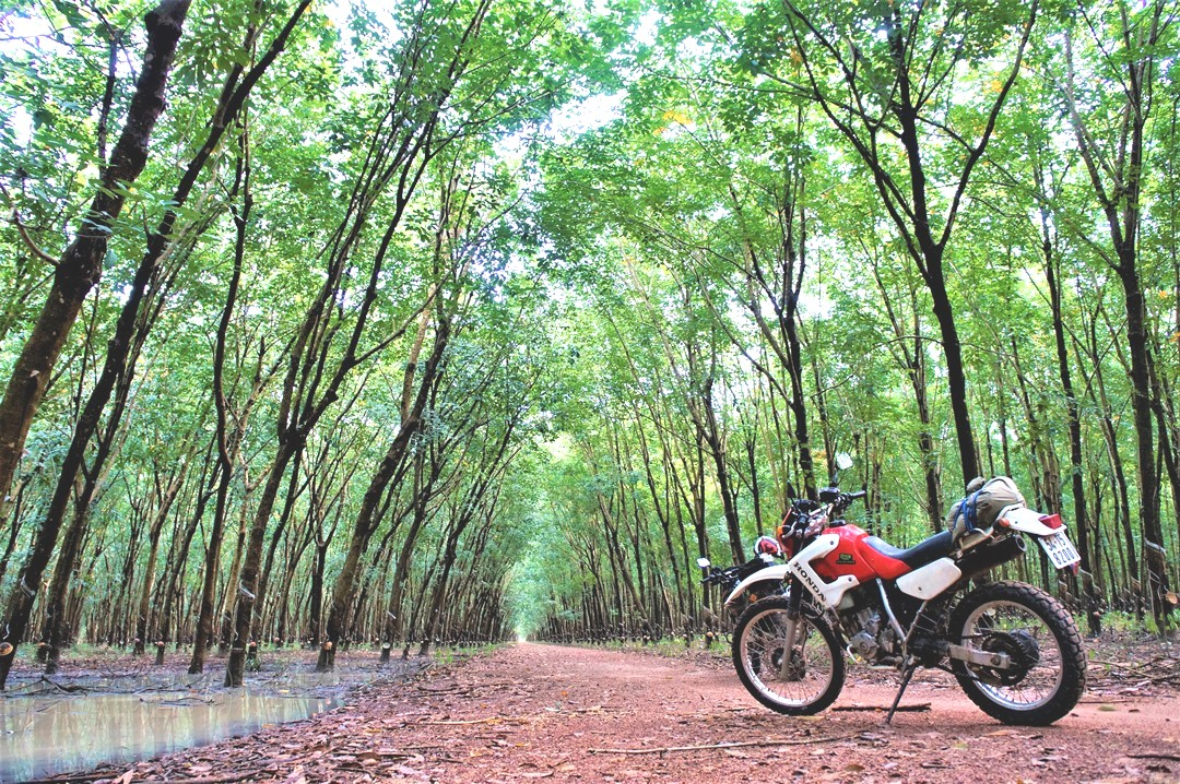 scenic-saigon-country-trails-on-250cc-dirt-bikes