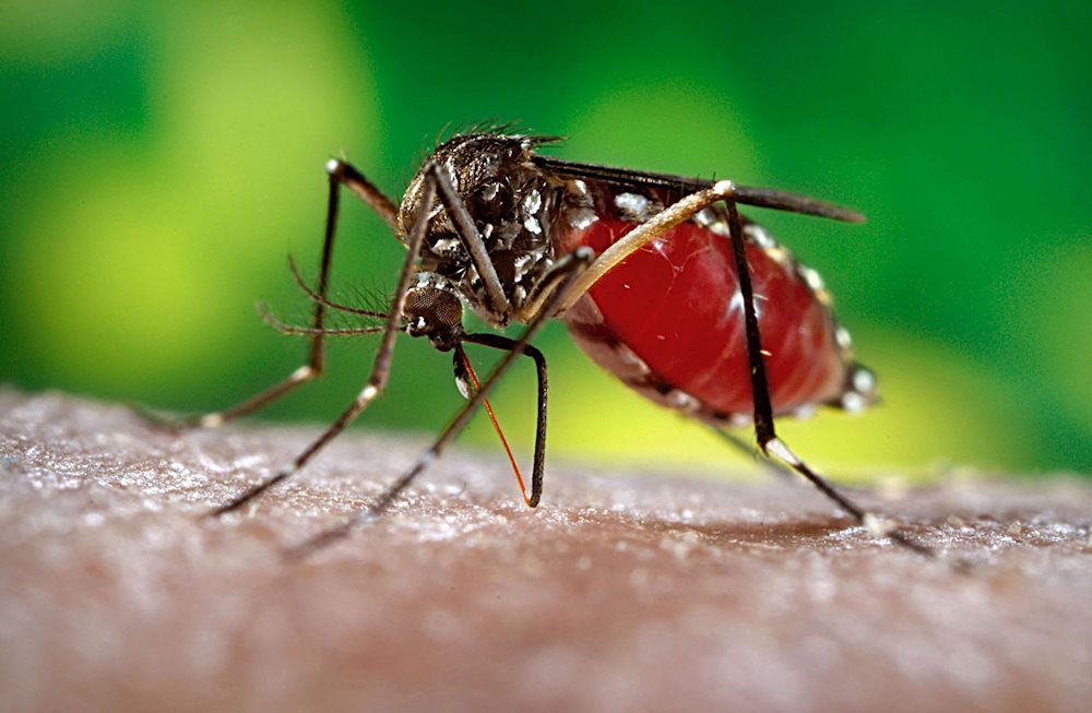 get-rid-of-mosquito-bite-by-using-special-spray-saigon-riders