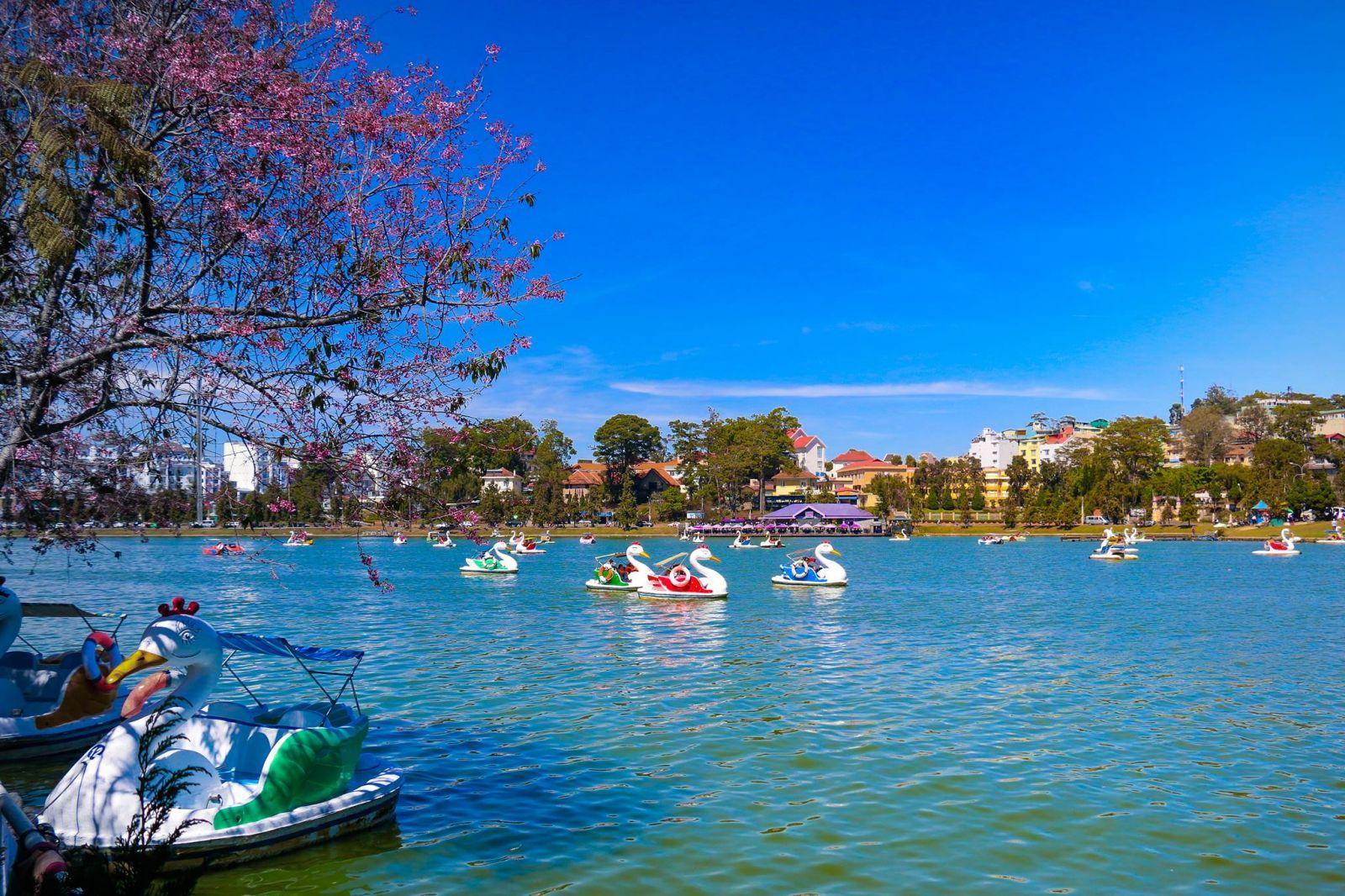 swan-pedal-boats-are-popular-in-xuan-huong-lake-saigon-riders