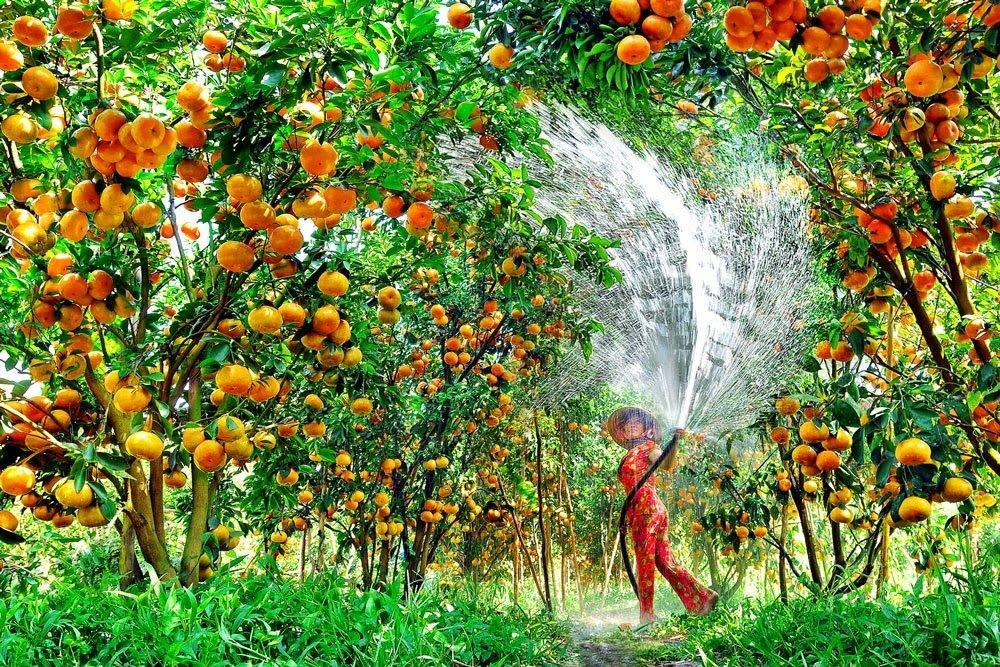 A woman is watering the trees in tropical garden