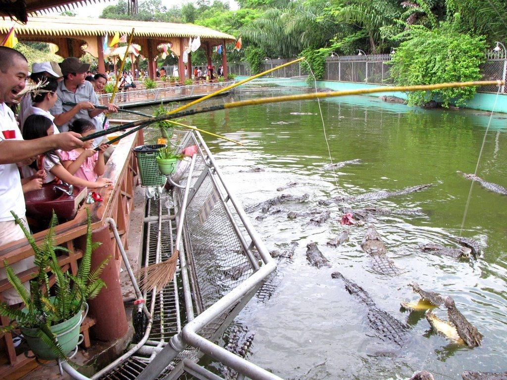 Visitors enjoy crocodile fishing