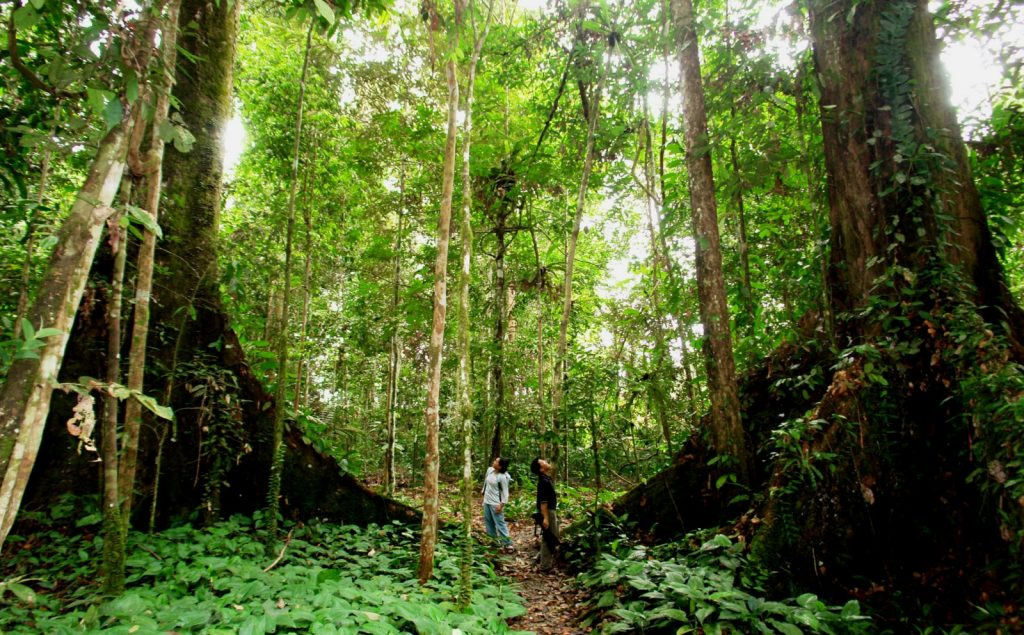 The landscape of tropical forest is in Nam Cat Tien Park.